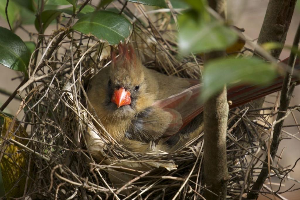 cardinals_02